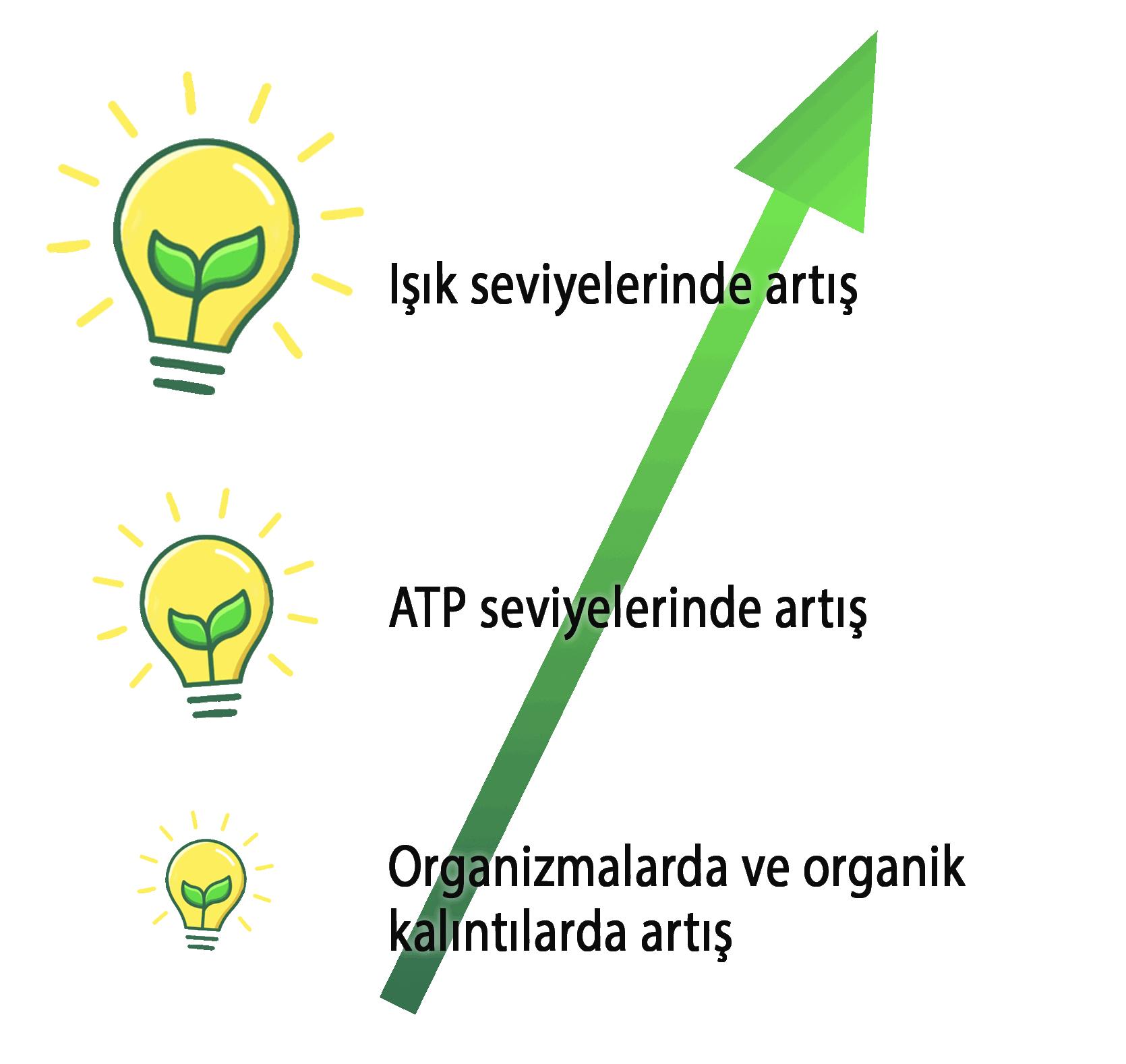 light in atp